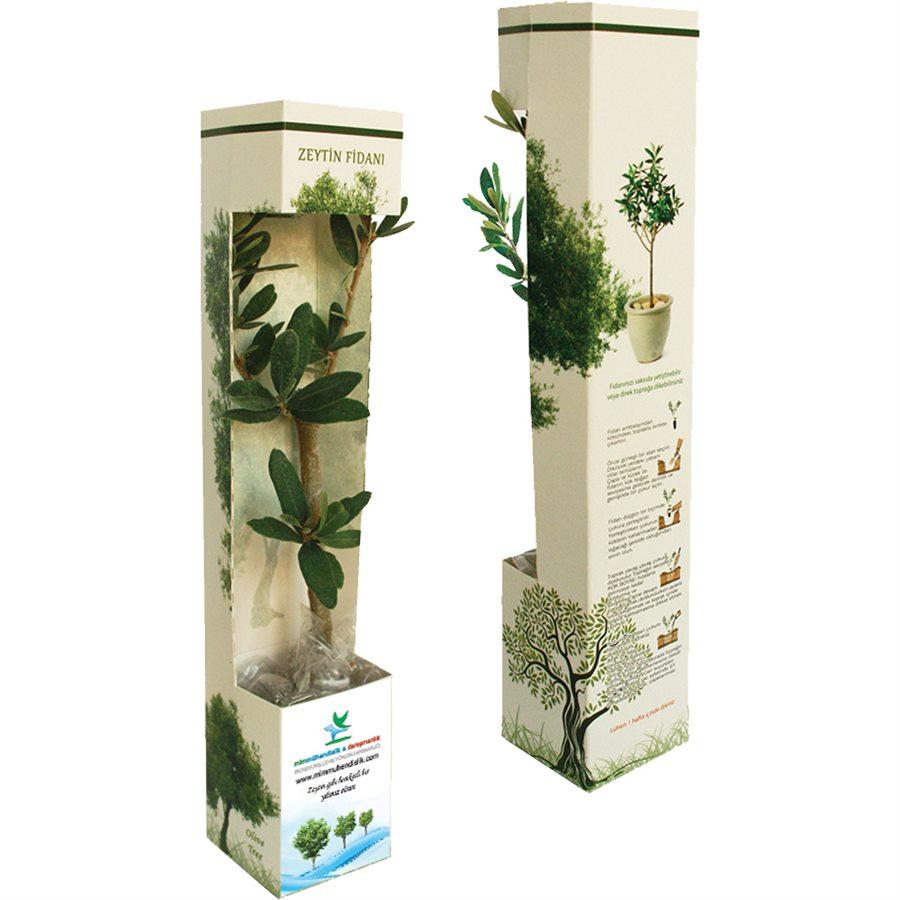 Karton kutu - Canlı Ağaç Fidanı