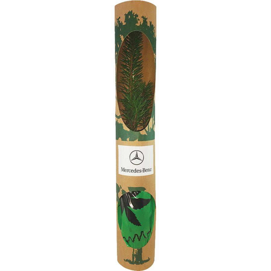 Kraft Karton kutu - Canlı Ağaç Fidanı